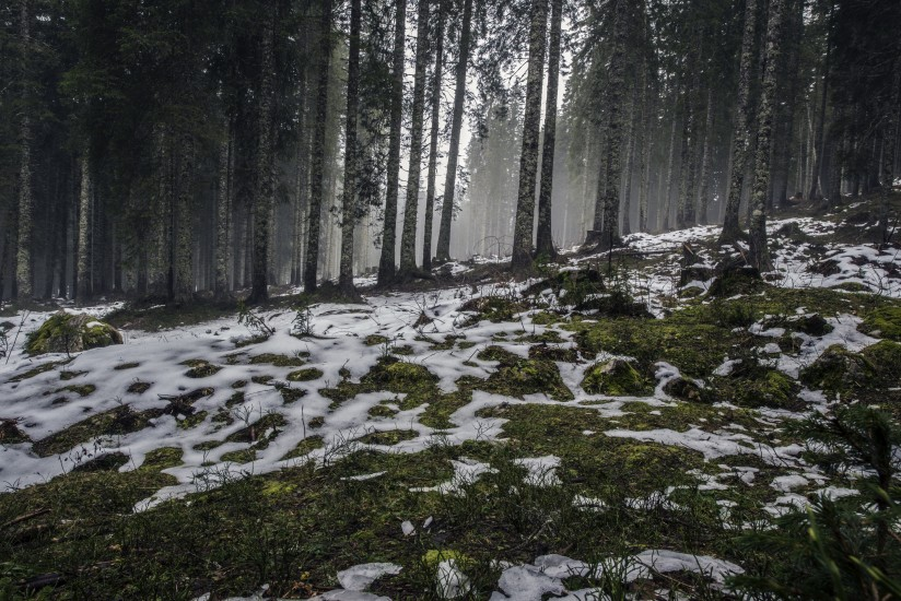 forest nature snow 4058 824x550 1